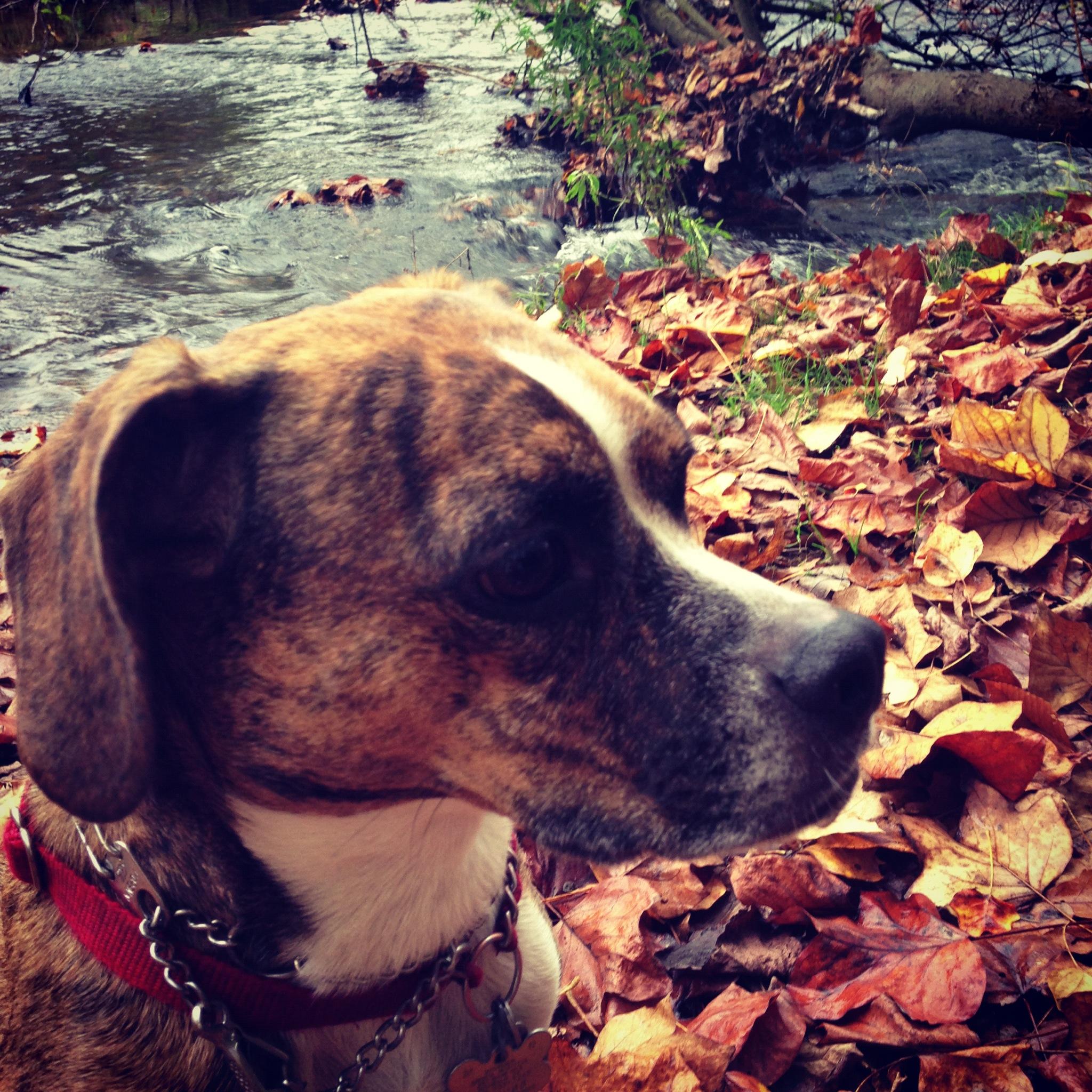Rowayton Dog Park Facebook
